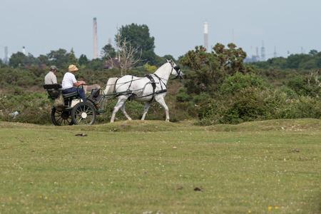 drafje: Echtpaar in paard getrokken buggy draf op heide