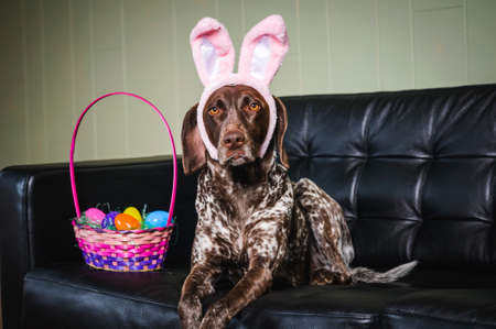 a dog wearing bunny ears next to basket of Easter eggs
