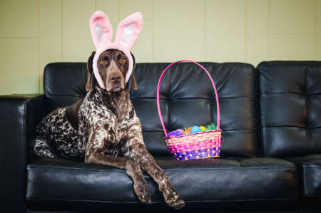 A dog wearing bunny ears and sitting next to a basket of Easter eggs