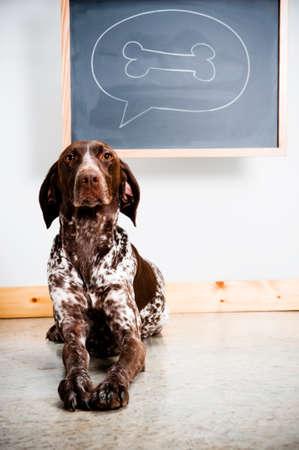 een hond na te denken over een been