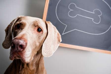 hueso de perro: un perro de pensar en un hueso Foto de archivo
