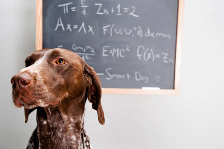 equations: a dog sitting in front of math equations