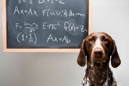 a dog with a chalboard
