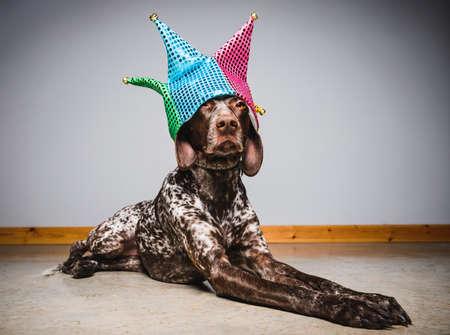 een schattige hond met een hoed