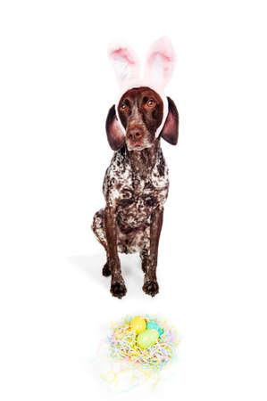 een schattige hond met bunny oren