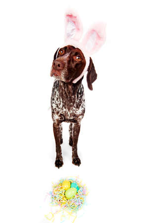 a cute dog wearing bunny ears Stock Photo