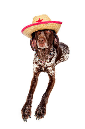 a cute dog wearing a cowboy hat Stock Photo
