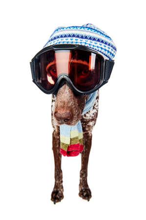 een schattige hond het dragen van ski-bril Stockfoto