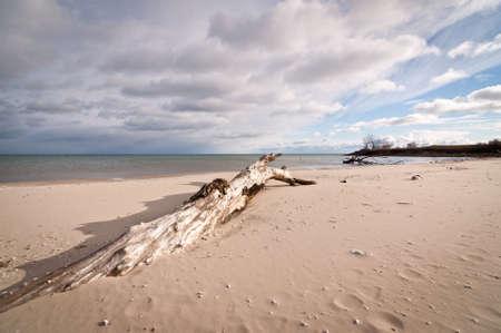 Driftwood lies on a sandy beach with dark clouds overhead.