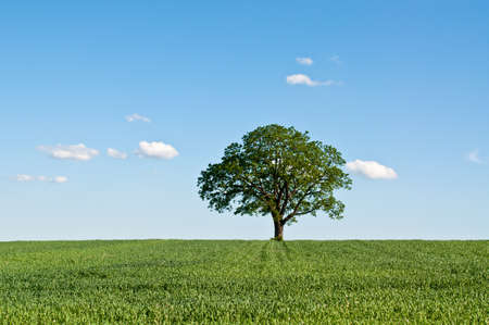 A lone tree stands in a green farm field with blue sky and clouds in the background.