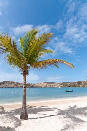 A coconut palm tree stands on a sunny Caribbean beach.