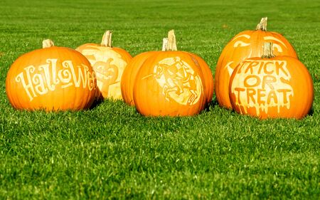 Picture of Halloween pumpkins, standing on a lawn
