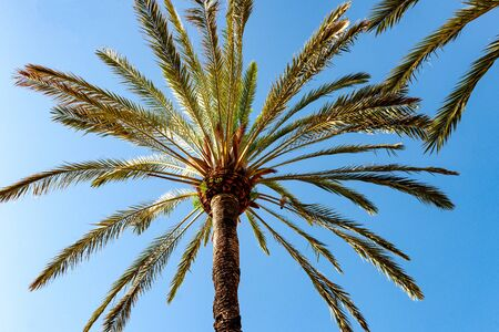 Stock picture of a palm tree