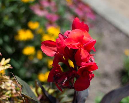 faerie: Beautiful summer flowers from the faerie garden.