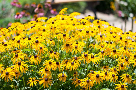 faerie: Beautiful summer daisies from the faerie garden. Stock Photo