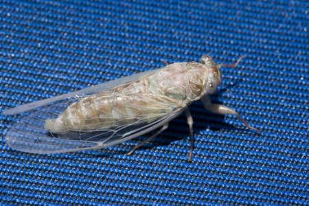 a newly hatched cicada crawling.