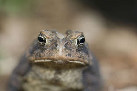 A macro view of a toad.