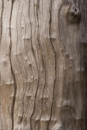 A close up view of a tree trunk.