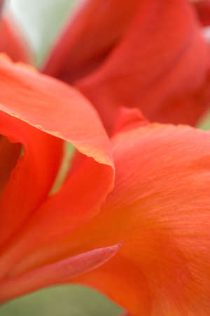 a close up view of the petals of a red lily.