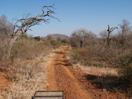 A typical South African bush road, dirt,gravel and dusty, with the dry vegetaion and brush on either side. Stock Photo - 4118001