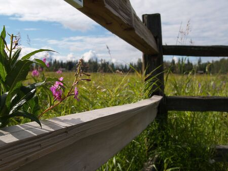 Through a wooden fence - rural photo