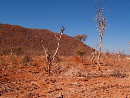 arboles secos: Primer plano del paisaje seco, �rboles muertos y polvoriento terreno en claro cielo azul.