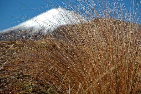 snow capped: Snow capped Monte Ngarauhoe, m�s all� de la cerca de matas de hierba. Un efecto abstracto de enfoque selectivo. Nueva Zelanda.