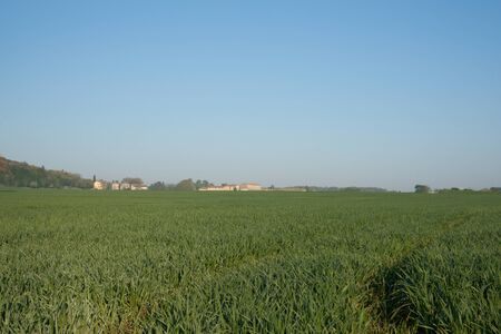 Tuscany, barley crop growing early spring, Italy. photo