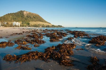 Seaweed washed up after storm 版權商用圖片 - 13192404
