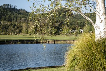betula pendula: Pond paesaggio