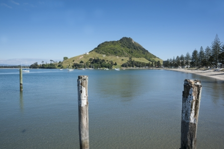 Calm Pilot Bay, Tauranga  photo
