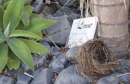 Love nest, birds nest fallen onto ground in garden with sign in background saying  photo