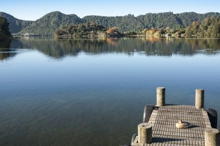 remoteness: Duck on Jetty on Lake Okareka, New Zealand
