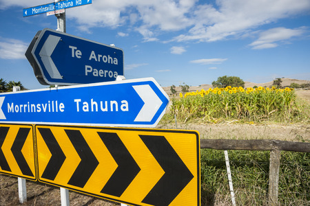 Sunflowers behind directions sign by highway in Waikato  Stock Photo