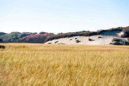 salt marsh: Salt marsh and sand dunes, Long Point Marsh, Massachusetts, National Seashore, Stock Photo