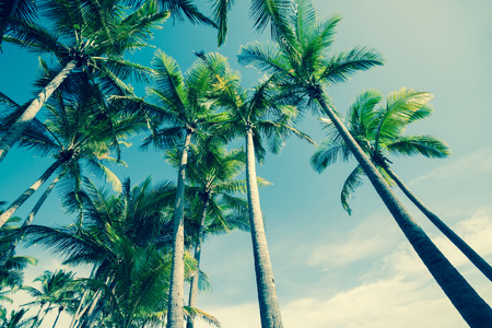 arbre: Retro palmiers de Faible angle de vue.