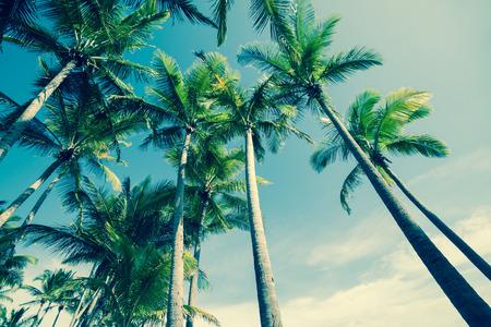 clima tropical: Retro �rboles de palma bajo �ngulo de vista.