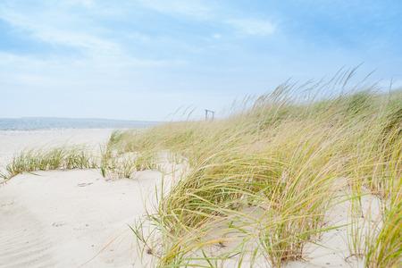 windswept: Windswept beach, typical Cape Cod coastal environment.