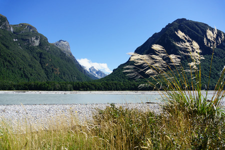silt: Toe-toe in breeze with Southern Alps landscape across the silt laden edge of Dart River on the Rees Track in the Mount Aspiring National Park, Otago, South Island, new Zealand. Stock Photo