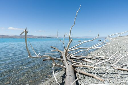 mackenzie: Dead tree, dried and bleached in the weather lying on stony shores of Lake Pukaki, Canterbury, South Island NZ. Stock Photo