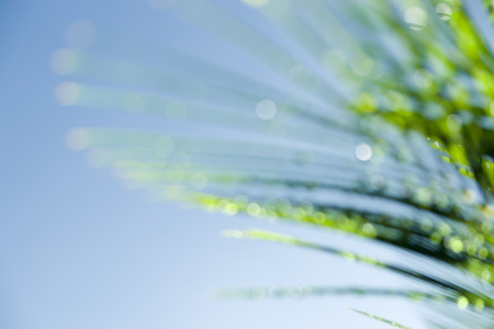 cycad: Defocused Cycad frond light catching on dew drops against blue sky.