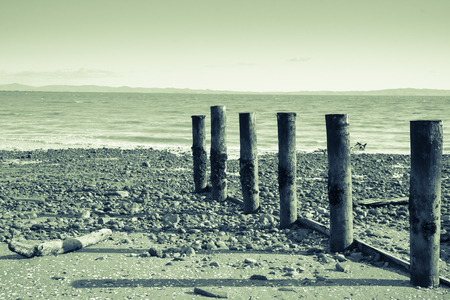 yesteryear: A cool overcast day at Tararu Beach, Thames, Coromandel., old jetty piles at low tide.