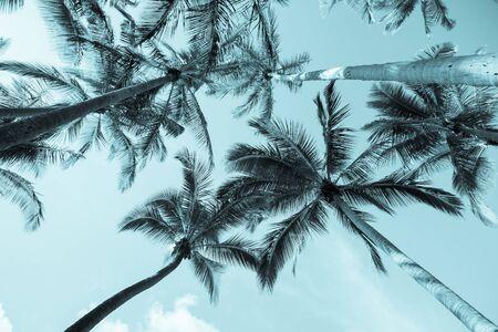 towering: Tropical Vintage image, palms towering above skyward.