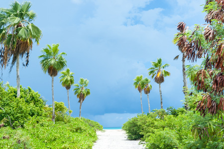 sway: Tropical dark clouds brighten and light lime green vegetation on path to beach as palms sway in breeze. Stock Photo