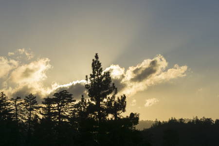 ponderosa pine: Backlit forest silhouette as setting sun catches on passing clouds lighting the sky above Stock Photo