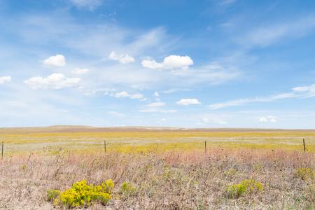 cielo de nubes: campo en el cielo azul de Arizona Ruta 66 de campo conejo amarillo cepillo flor con blancas nubes hinchadas que sopla a través. Foto de archivo