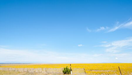 expansive: Blue sky over wide expansive flat yellow fields in Arizona countryside