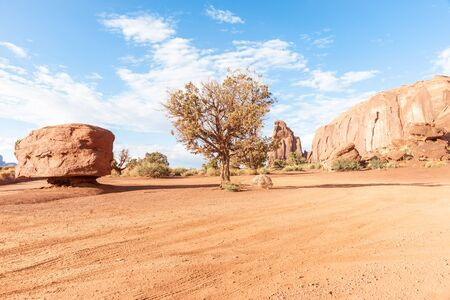 desert vegetation: Tree stands in flat area surounded by red rock outcrops and desert vegetation in Monument Valley USA