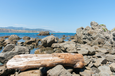 foreshore: Rocky foreshore with washed up log