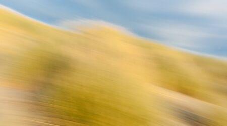hues: Golden hues of beach grass in long exposure nature abstract Himutangi Beach Levin New Zealand